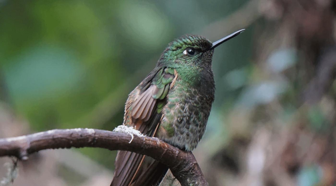 International Birding Center Eilat