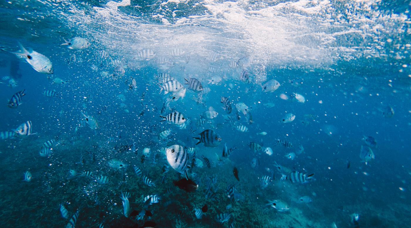 Underwater Observatory Marine Park in Eilat